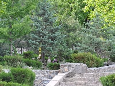 九公山陵园25800元树葬